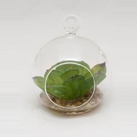 Bol sticlă & plantă frunze